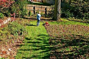 Посадка газона осенью