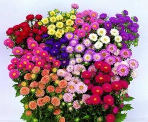 Садовые цветы на срезку