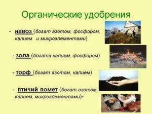 Какие удобрения органические