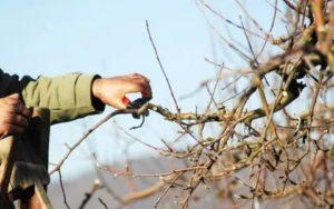 Обрезка деревьев весной видео
