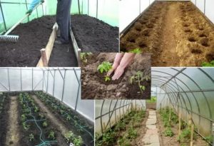 Высадка рассады томатов в теплицу из поликарбоната