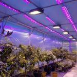 Клубника выращивание на даче