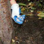 Выращивание клюквы в саду