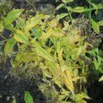 Технология выращивания клубники