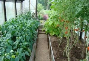 Что можно посадить в теплицу с помидорами
