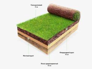 Подготовка почвы под рулонный газон