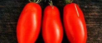 Длинные сорта томатов
