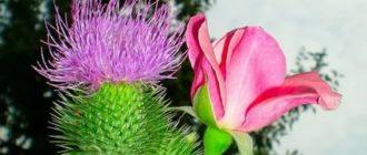 Дикие растения цветы