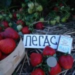 Подготовка почвы осенью под помидоры
