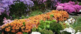 Многолетние цветы посадка осенью