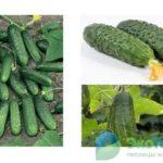 Плодовые деревья болезни ствола лечение