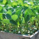 Когда начать выращивать рассаду