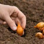 Осенние удобрения для деревьев