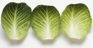 Лечебное свойство капустного листа