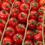 Лучшие сорта помидоров для подмосковья