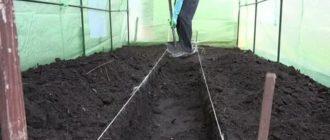 Как правильно подготовить почву в теплице