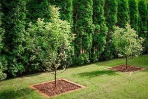 Какие деревья и кустарники посадить на даче