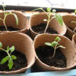 Черная смородина выращивание уход