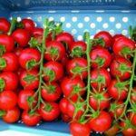 Опыление томатов