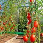 Уход за ежевикой садовой видео