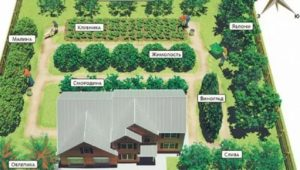 Как расположить деревья и кустарники на участке