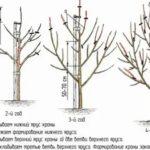Выращивание эустомы на срезку