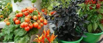 Семена овощей для выращивания на балконе