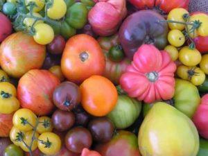 Необычные сорта томатов
