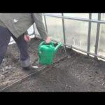 Петуния выращивание и уход прищипывание