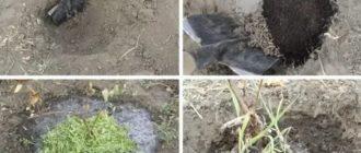 Какая почва нужна жимолости