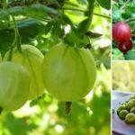 Лучшие сорта помидор и огурцов