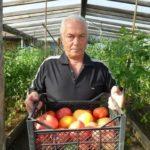 Лучшие сорта томатов для беларуси