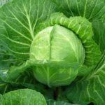 Гиацинт выращивание и уход