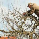 Когда собирают урожай яблок