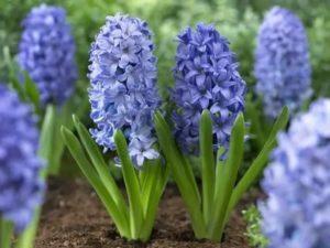 Ранние цветы в саду