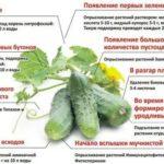Как выращивать сосны