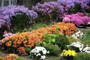 Посадка осенью многолетние цветы