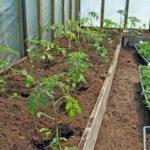 Урожайность огурцов в открытом грунте