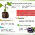 Как посадить черную смородину черенками