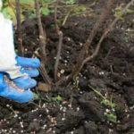 Выращивание томатов семенами