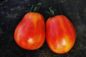 Польские сорта томатов