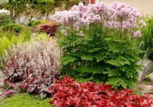 Светолюбивые многолетники для сада