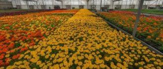 Как вырастить цветы