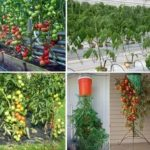 Правила обрезки плодовых деревьев видео