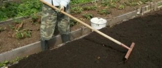 Подготовка грядки для посадки клубники