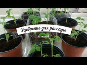 Нитроаммофоска для рассады помидоров