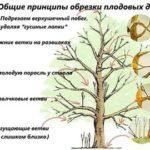 Как получить свои семена огурцов