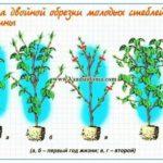 Выращивание сухоцветов