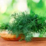 Как рассадить смородину