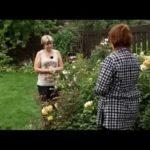 Посадка луковиц цветов